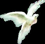 ldavi-heartwindow-messengerbird1.png