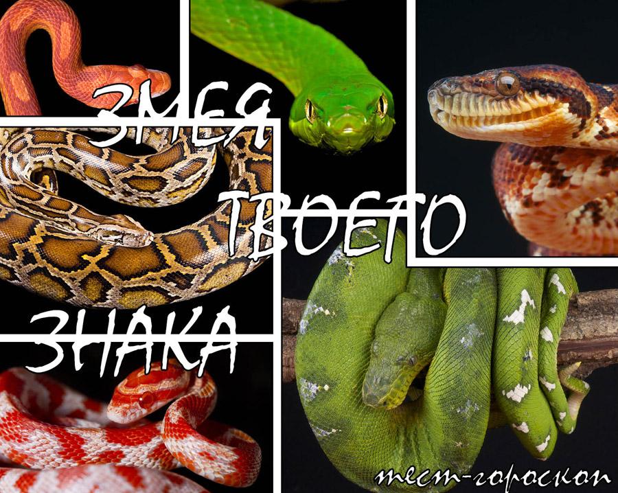 змея символ 2012 года