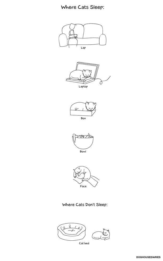 Смешные комиксы про котов на английском языке 0 c6d9f aae25665 orig