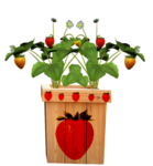 DBA STRAWBERRY FLOWER POT 1.png