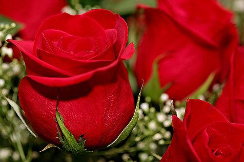 фото очень красивых цветов: