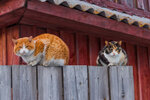 Коты и кошки на заборе...