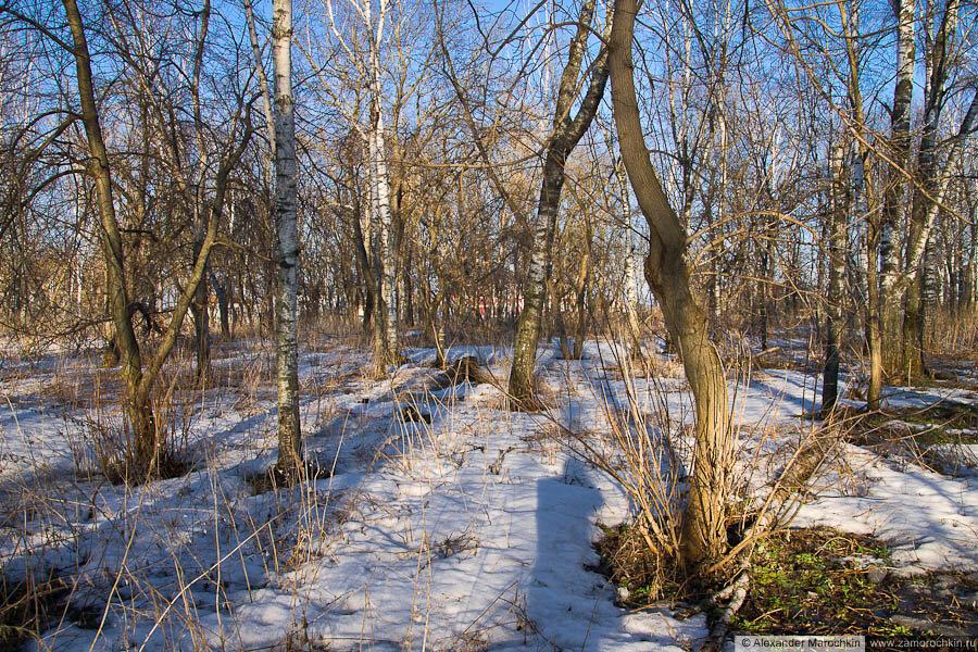 Деревья в городском парке (Краснослободск)