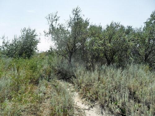В августе, среди растений песчаной косы