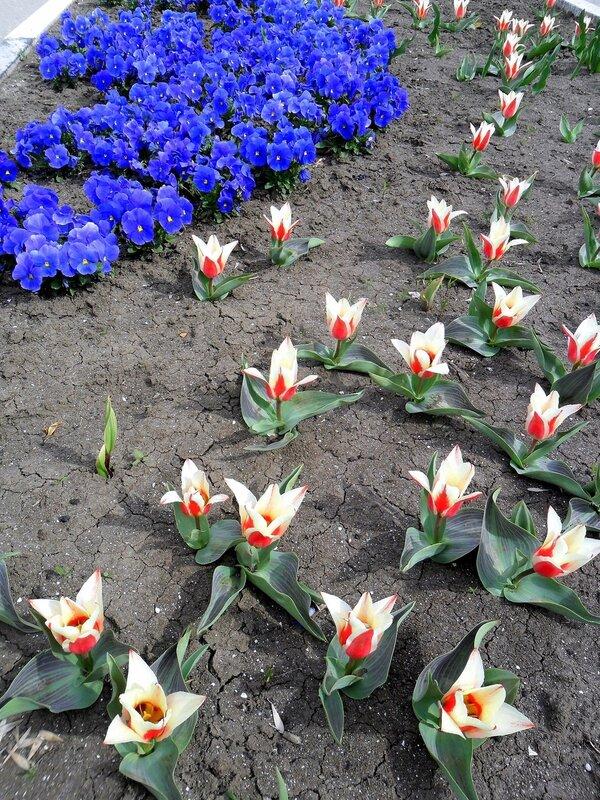 Апрельские краски ясного дня
