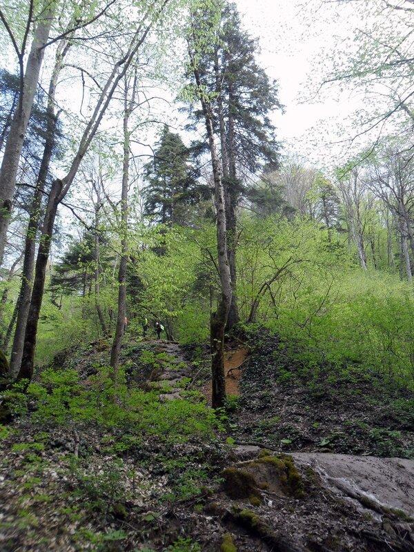 У реки, окрестности Горячего Ключа, апрель 2013, Краснодарский край, Кавказ
