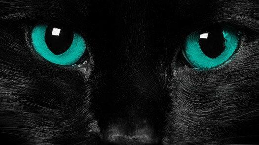 что цвет глаз у кошки