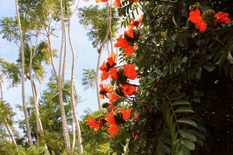 растительность вьетнама фото показала себя как