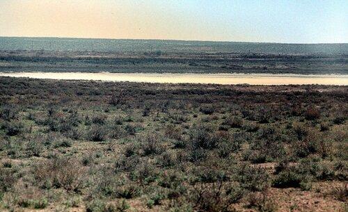 Полынная пустыня и солончак