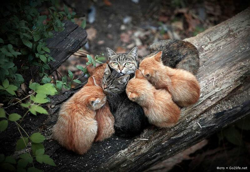 Go2life.net • Кошка с разноцветными котятами