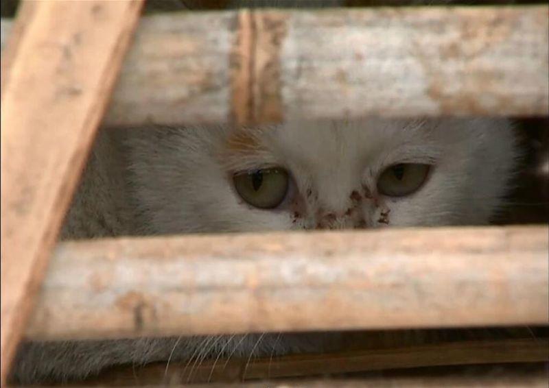 Активисты спасли около 2000 котов, которых должны были съесть