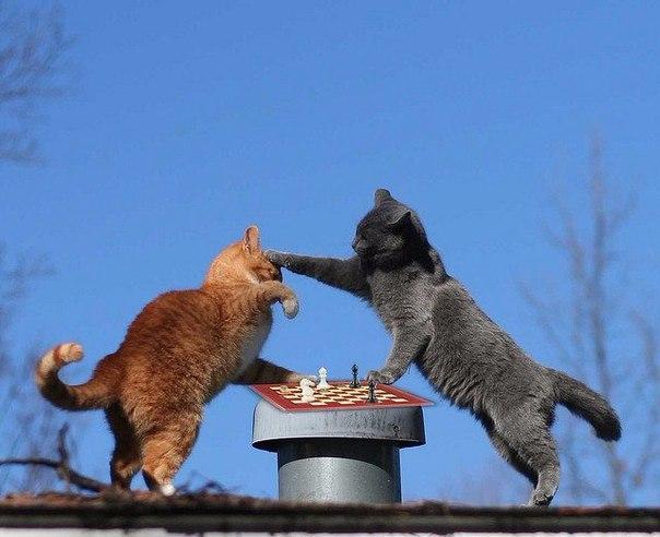 кошки-5.jpg