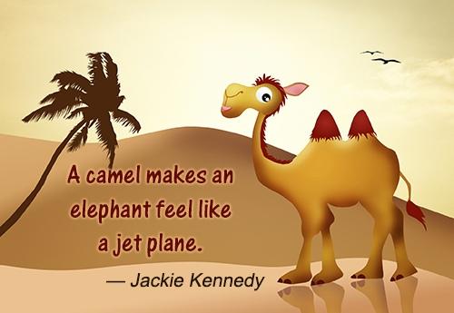 A camel makes an elephant feel like a jet plane