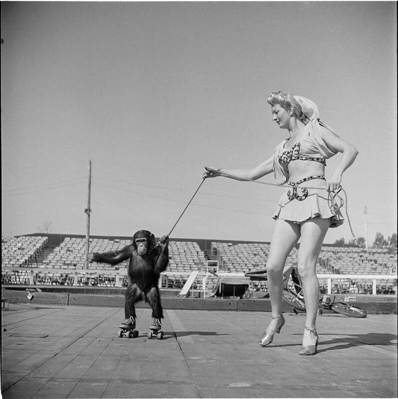 Цирковая артистка с обезьянкой на роликах, 1948 год