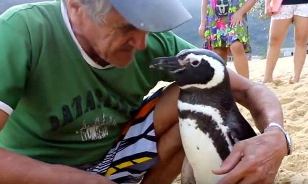 Пингвин навещает спасителя каждый год