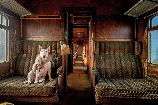 """Orient Express"". ""My bull terrier Claire photographed in an abandoned train, one of a series that I"