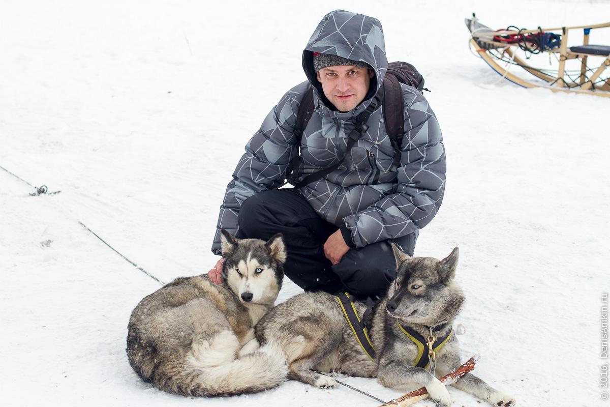 Питомник сибирских хаски DogWinter 24