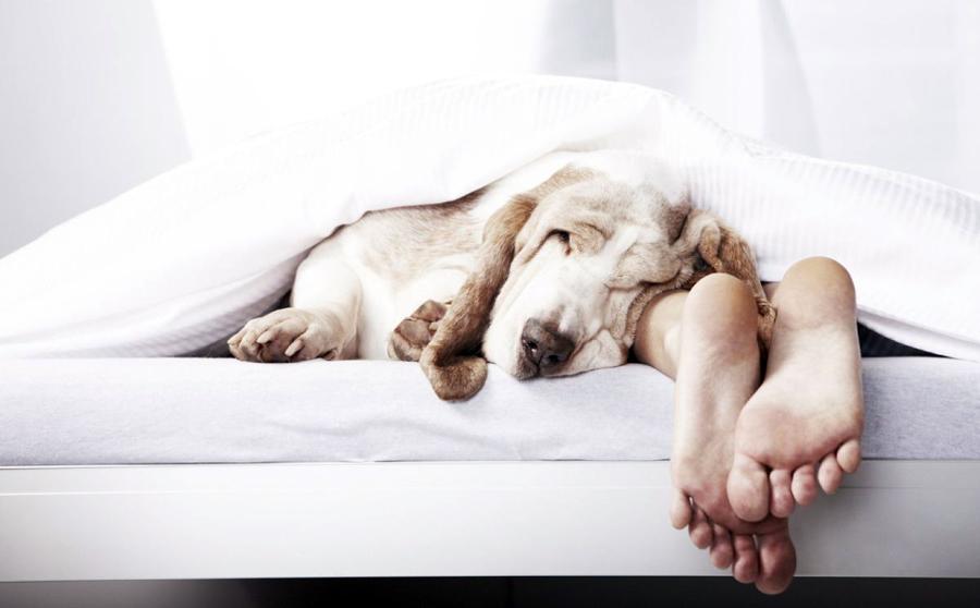 Значение снов в жизни человека