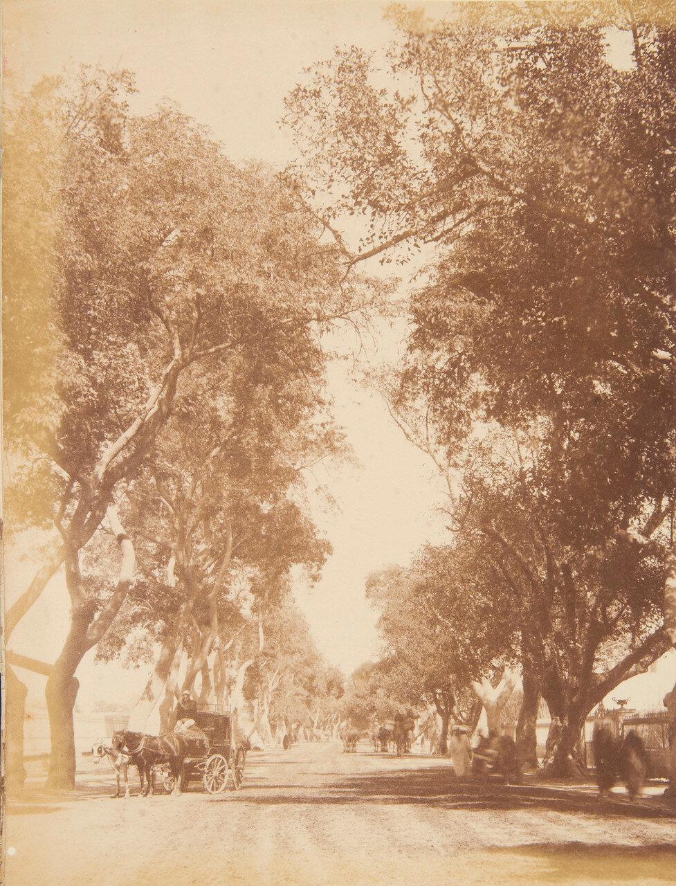 Каир. Шобра-роад. 1877-82