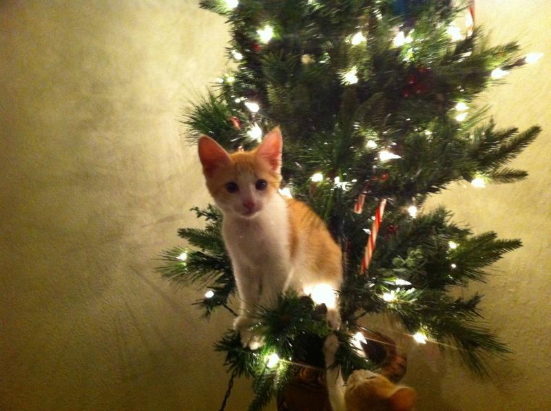 Коты на ёлке - фото 3