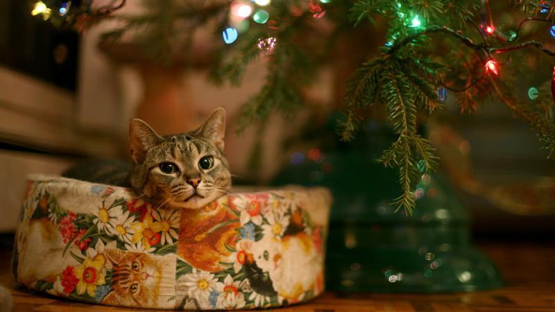 Коты на ёлке - фото 17