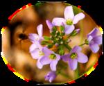Орхидеи,маки,лилии и т.д.