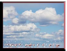 Кения. Озеро Накуру. Фотоkamchatka - Depositphotos