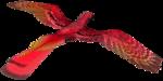 feli_l_fire bird1.png