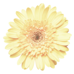 CD_After The Rain_flower 9.png