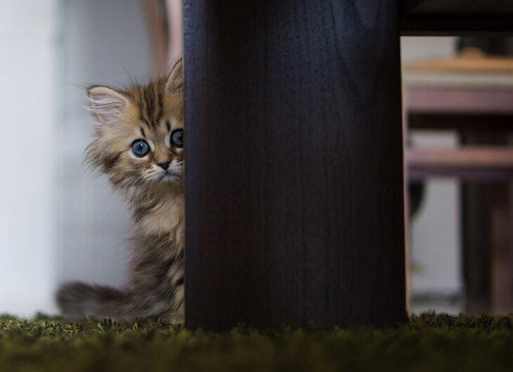 Фото: Очаровательный котёнок