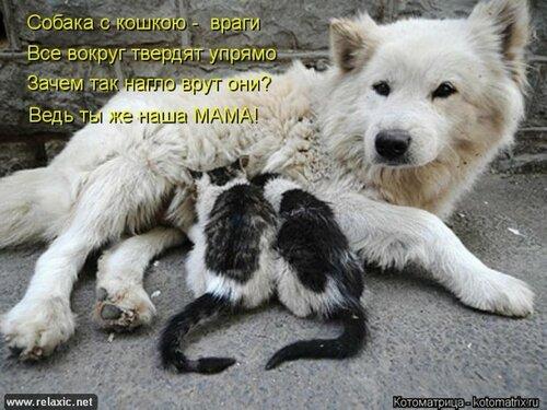 http://img-fotki.yandex.ru/get/4121/194408087.1/0_9085e_5a64bdd5_L.jpg