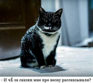 http://img-fotki.yandex.ru/get/4121/194408087.2/0_93ab5_8d4d579a_M.jpg