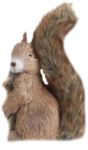 SQUIRREL2.png
