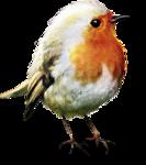 ldavi-feathersandmittens-littlerobin5.png