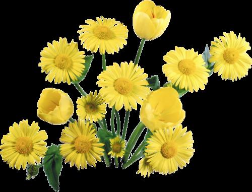 Стихи про жёлтые цветы