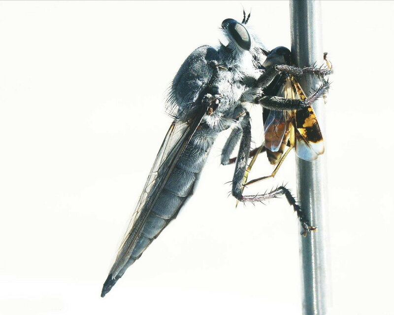 Обои Animal (Животные) 2108