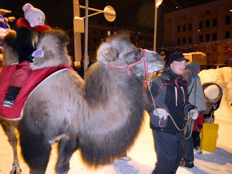 Верблюд на Театралке