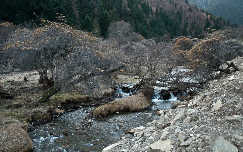 Облепихи над рекой