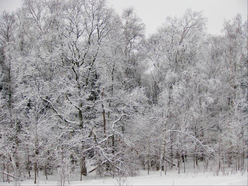 Белые от инея деревья