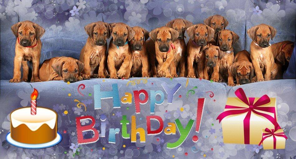 Поздравление с днем рождения собаки картинки