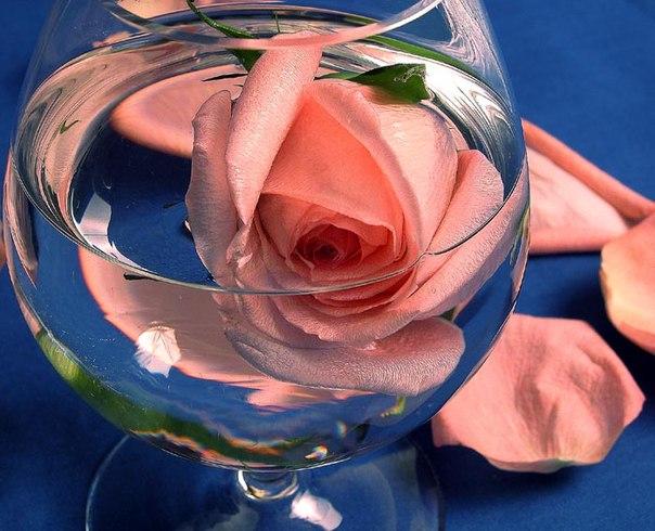 роза в бокале.jpg