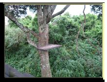 Кения. Национальный парк Абердар. Лодж The Ark