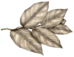 SkyScraps-Adore-Leaves6.png