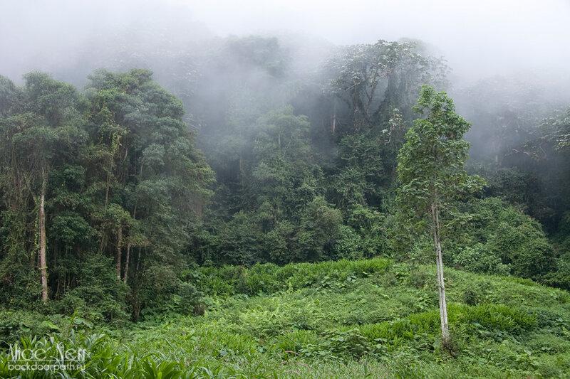 облака во влажном лесу, венесуэла