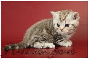 http://img-fotki.yandex.ru/get/4122/162753204.12/0_b80ed_30adf6e9_M.jpg