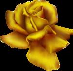 goldenrose6 copy.png