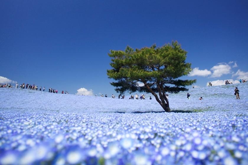Живописный японский парк Хитати Кайхин 0 1422dd 7aa53948 orig