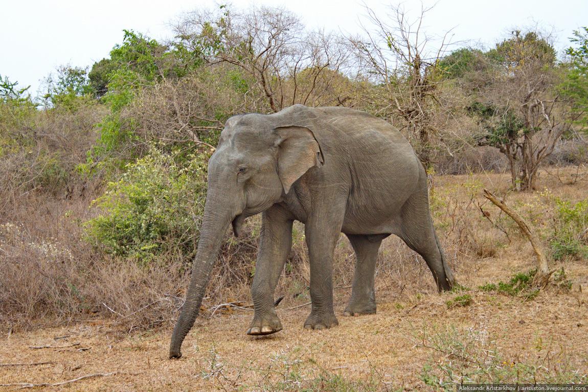 Шри-Ланка_Пик Адама_04