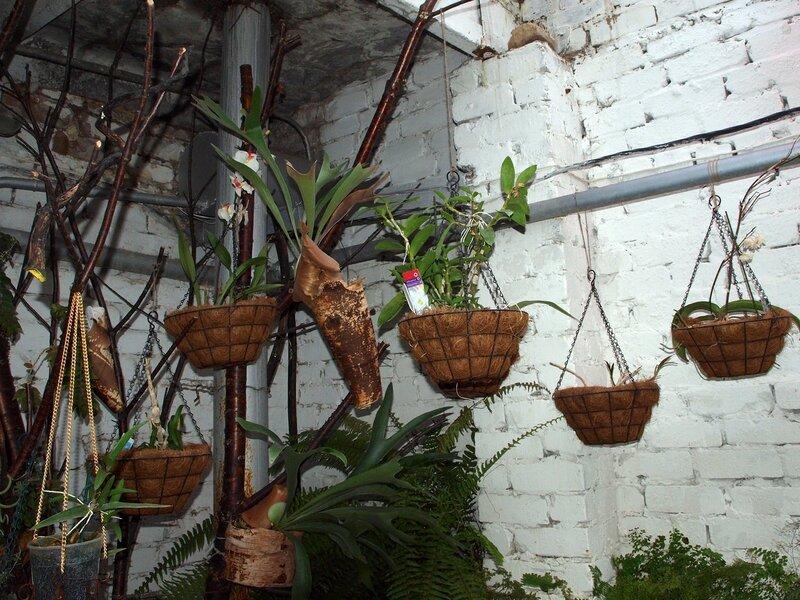 орхидеи и эпифиты