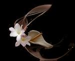 SKF_Flower22510.06.png